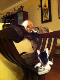 brincadeira de gato