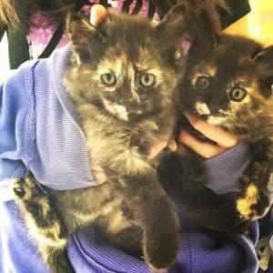 filhotes gato adoção