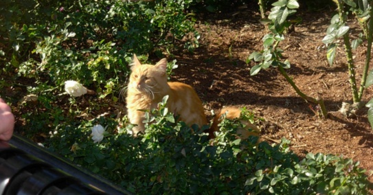 gato disney