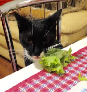 gato vegetariano