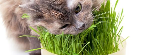 graminha-gatos-1