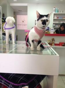 gato pet shop gloria