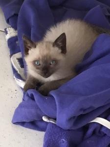 Blue House - gatinho do PetHouse 408 Sul