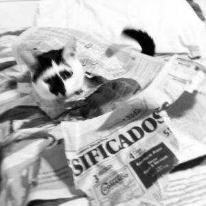 gato informado