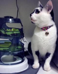comedouro gato