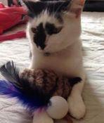 gato brinquedo
