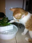 gato fonte