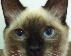 gato olhar