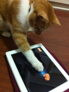 gato tablet