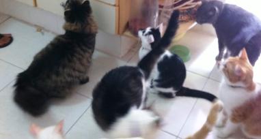 gato comida