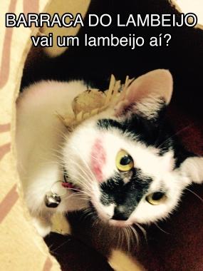 beijo gato