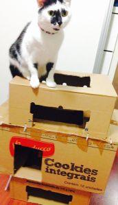 gato caixa