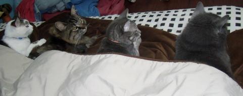 gatos sono