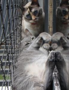 gato rede proteção
