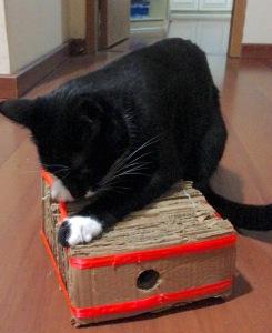 gato arranhador papelão