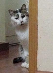 Teobaldo aguardou a vez de brincar com o novo arranhador atrás da porta