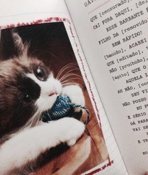 livro gato