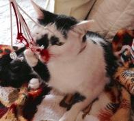 gato brincando