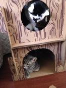 gato caixa papelão