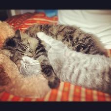 um gato doce e cheio de gratidão.