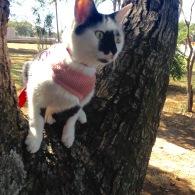 gato glória