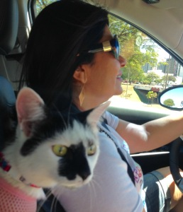 gato carro