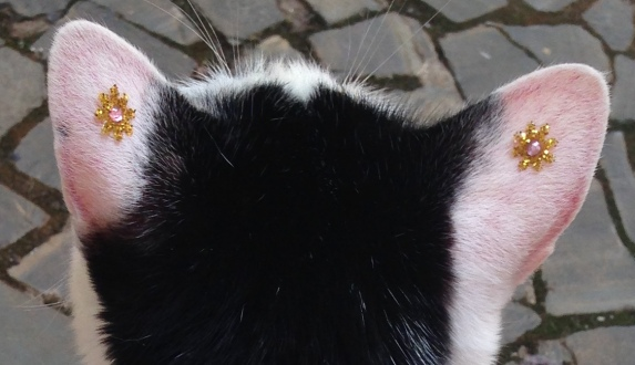 brincos gato