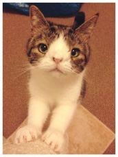 Foto: Reprodução / Bored Cat