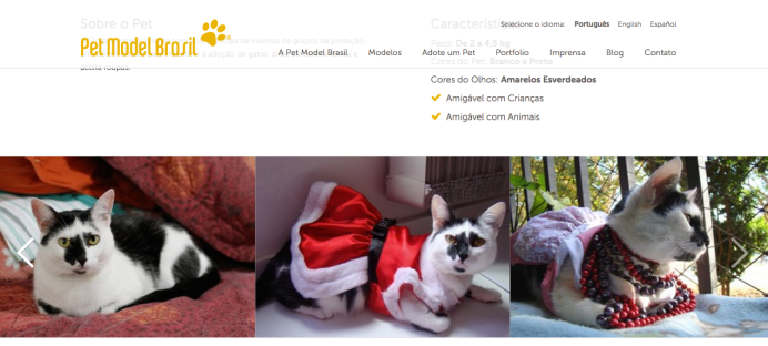 pet model brasil