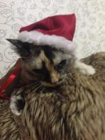 mariatu gato natal