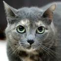 cinzinha pimenta gata