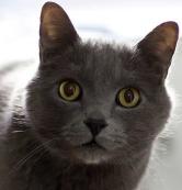 yuri gato