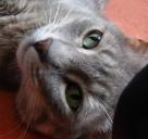 sarcozy gato