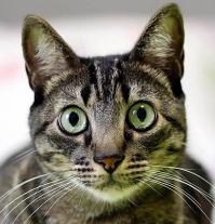 nicodemus gato
