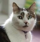 teobaldo gato