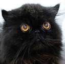 miguel marquez de paula gato