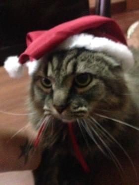 shay gato natal