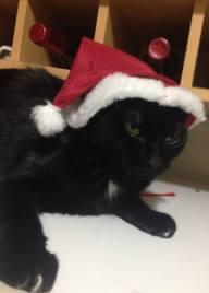 radija gato natal