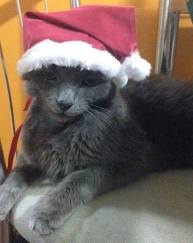 yuri gato natal