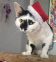 glória gato natal