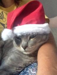 sarcozy gato natal