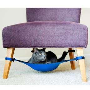 rede gato
