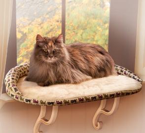 janela gato