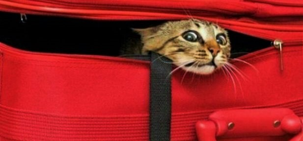 gato bagagem