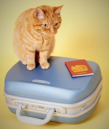 bagagem gato