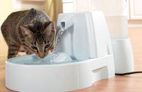 cat fountain